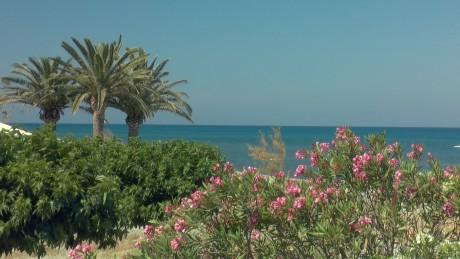 plage fleurs